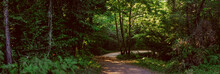 Path In A Lush Green Forest With Sun Rays Through The Leaves