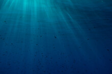 Underwater Surface Of The Sea