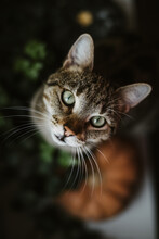 Tiger Cat And A Pumpkin