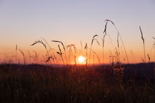 Silhouette Of Grass At Dawn