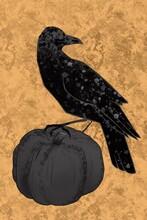 A Crow On A Pumpkin