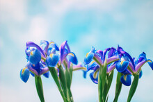 Orchids Against Blue Sky