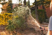 Unrecognizable Man Watering Flowers