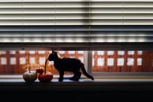 Black Kitten And Pumpkins
