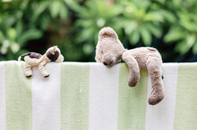 Teddy Bear Drying On A Towel After A Wash