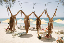 Octopuses Drying In The Hot Sunshine. Naxos, Greece.