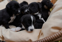 Beautiful Black Puppies Sitting In A Big Pile On A Chair At Home