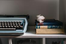 Vintage Items On Shelf