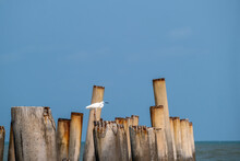 White Egret Standing On The Monolith At A Beach In Phetchaburi Province, Thailand.