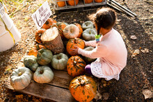 Young Girl Examines Pumpkins At Farm Stand
