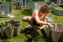 Curly Haired Boy In Shorts Plants Herbs In Planter