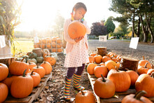 Girl In Rainbow Boots Looks At Pumpkin At Farm Stand
