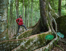 Asian Woman Standing On Tropical Tree While Trekking In Rainforest