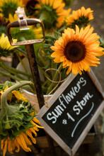 Sunflower Blooms For Sale With Sign