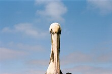 Portrait Of A Pelican At The Beach