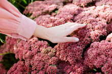 Woman Touches Pink Flowers