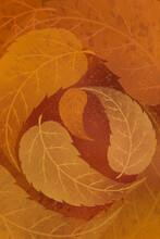 Fall Leaves In Circular Pattern