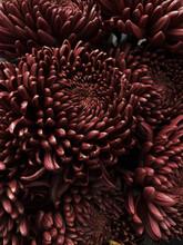 Autumn Mood: Chrysanthemum In Bloom