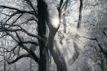 Sun Rays Shining Through Falling Snow