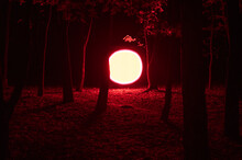 Neon Red Circle In The Woods