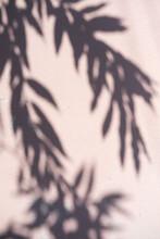 Tropical Leaf Shadow On Pink Wall