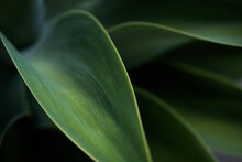Close Up Of Green Tropical Leaves