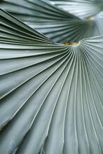 Close Up Pf Palm Detail