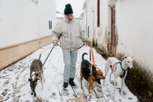 Msn Walking Four Dogs In The Winter