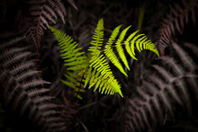 Dry And Green Ferns.