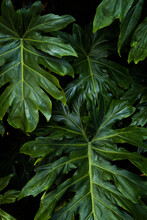 Close Up Of Tropical Green Leaves