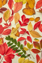 Autumn Leaves Background Of Yellow And Orange Colors.