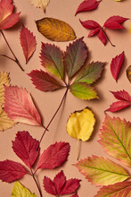 Colorful Collage From Fallen Natural Leaves.