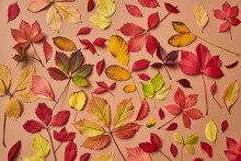 Holiday Autumn Colorful Leaves Background.