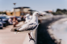 Seagull Standing On Railing