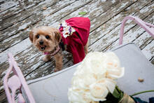 Dog And Roses