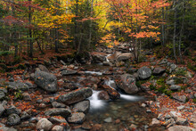 Colorful Autumn Stream In The White Mountains