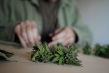 Close Up Of Senior Male Hands Trimming Medicinal Cannabis On Table