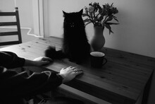Black Cat On The Table