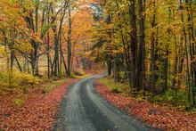 An Autumn Road In Vermont