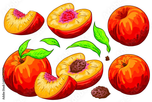 Fototapeta Group of fruit cut peaches, peach seed and leaves. Isolated on white background. Peach illustration, hand draw cartoon vector. Colorful fruits.  obraz