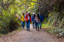 Group Of Friends Walking On Path In The Woods