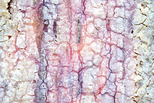 Abstract Texture Of Colorful Bark