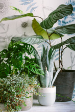 Real And Faux Houseplants Against A Botanical Design Wallpaper