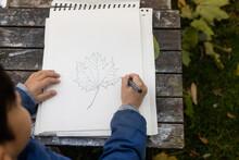 Child Drawing Leaf In Sketchbook