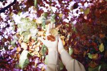 Autum Leaf On A Hand