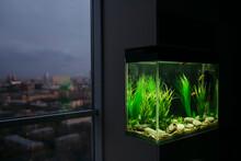 Modern Interior With An Aquarium.