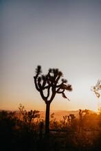 Sunset In Joshua Tree Park