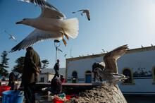 Fishermen Sorting Fresh Catch In The Port Of Morocco