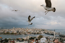 Seagulls Over Istanbul