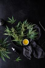 Cannabis Oil   Fresh Plants